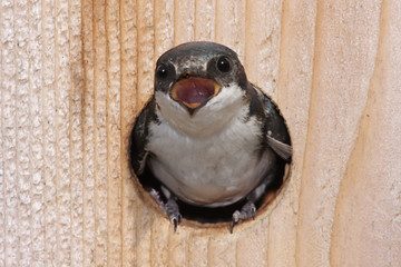 Fotoväggar - Bird In a Bird House
