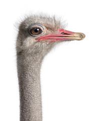 Zelfklevend Fotobehang Struisvogel close-up on a ostrich's head
