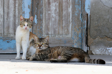 2 cats front of a blue door on a Greek island