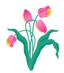 flower,tulip