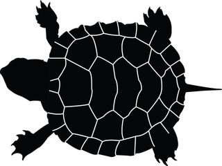 turtle - vector