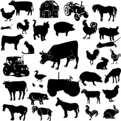 Farm animals collage (vector)