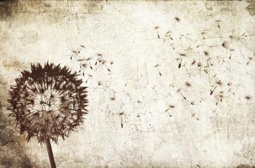 blowing dandelion background