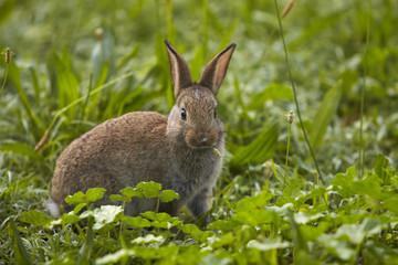 Coniglio mangia erba foto2 della serie coniglio mangia