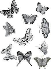 ten gray butterflies collection