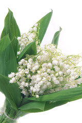 Wall Murals Lily of the valley Lilies of the valley