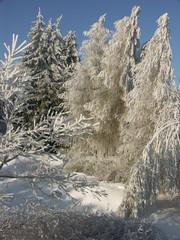 Winterlicher Zauberwald im Hochharz VII