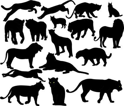 wildcats collection silhouettes