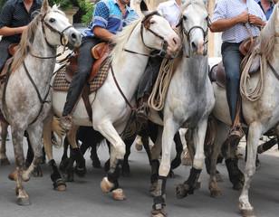 equitation camargue