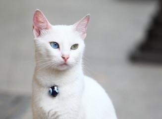 Katze mit einem blauen und einem grünen Auge