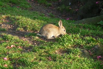 Rabbit In Park
