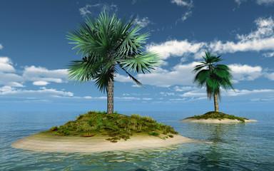 palms on island