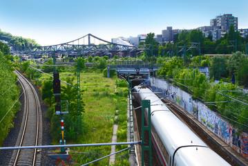 Urbaner Urwald