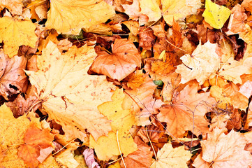 autumn fallen leaves background