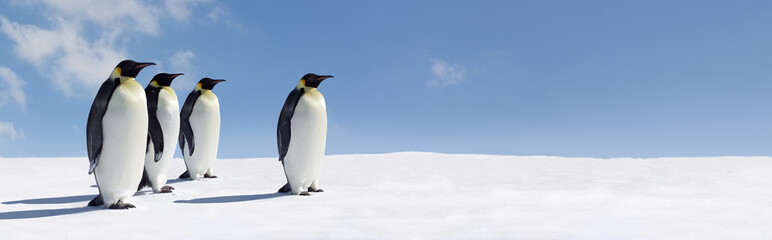 Canvas Prints Antarctica Penguin Panorama