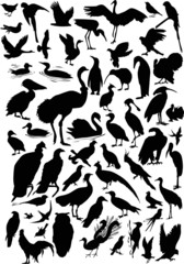 fifty seven bird silhouettes