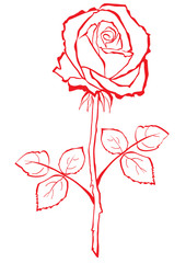 Hand sketched stylized rose.