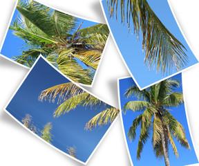 des cocotiers sur photos courbes