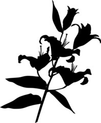 lily flower silhouette