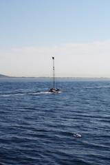 Spadara sullo stretto di Messina