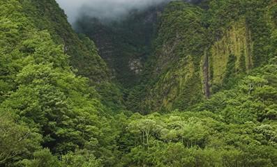 Madeira laurisilva