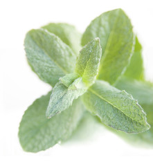 natural peppermint close-up