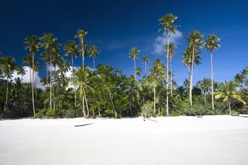 White sand beach with palms