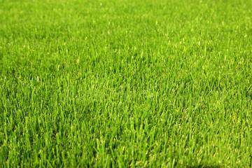 Healthy grass background
