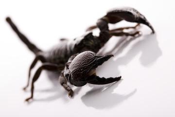 Eight-legged scorpion