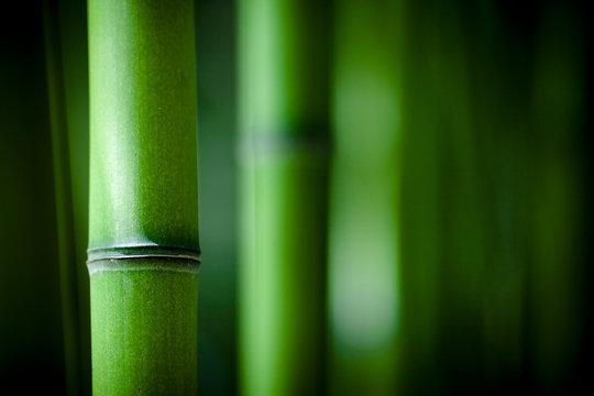 Bambou zen