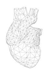 3D front view of the human heart