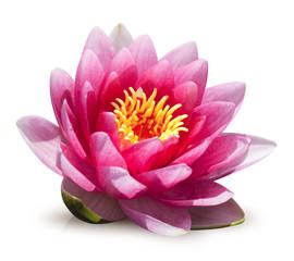 Foto auf Gartenposter Lotosblume fleur de lotus sur fond blanc