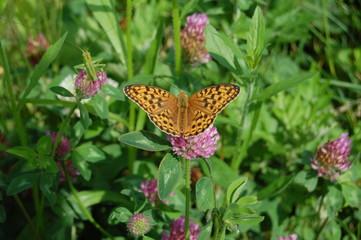 花に寄る蝶