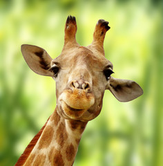 Giraffe vor grüner Landschaft
