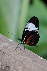 A delicate butterfly