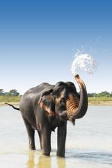 Photo sur Aluminium Népal bathing elephant in river in nepal