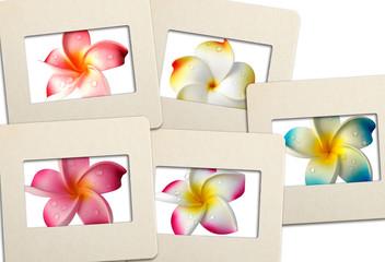 fleurs de frangipanier sur diapositives