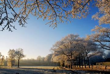 winter landscape in holland