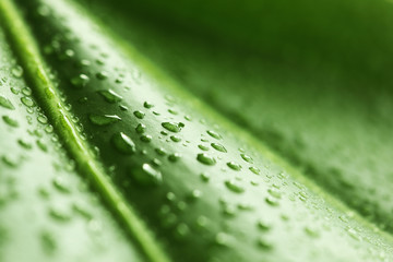 Green leaf with rain droplets