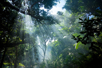 sunlight in tropical forest