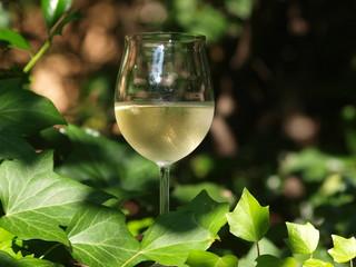 Weißwein 3