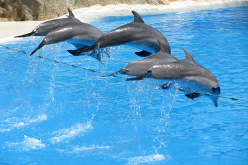Poster de jardin Dauphin park dolphins
