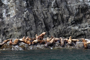 Endangeroud Stellar Sea Lions