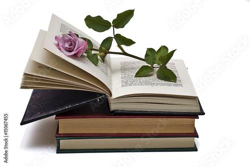 """""""Rosa Sobre Libro Abierto."""" Fotos De Archivo E Imágenes"""
