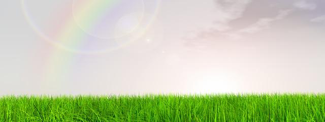 high resolution 3d green grass,  blue sky banner with a rainbow