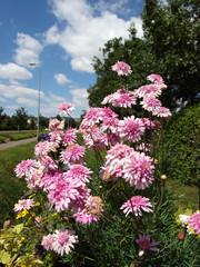 jardinière municipale