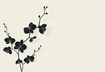 Beautiful orchid with shadow, vector illustration