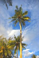 Palmen im Himmel von Thailand