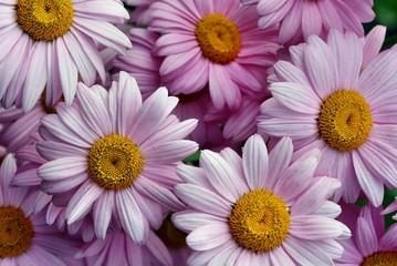 Juni Blume