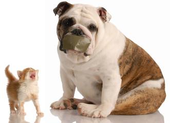 dog and cat fight - bulldog sitting beside complaining kitten